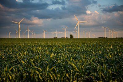 Wind turbines in a corn field on a souther Minnesota farm