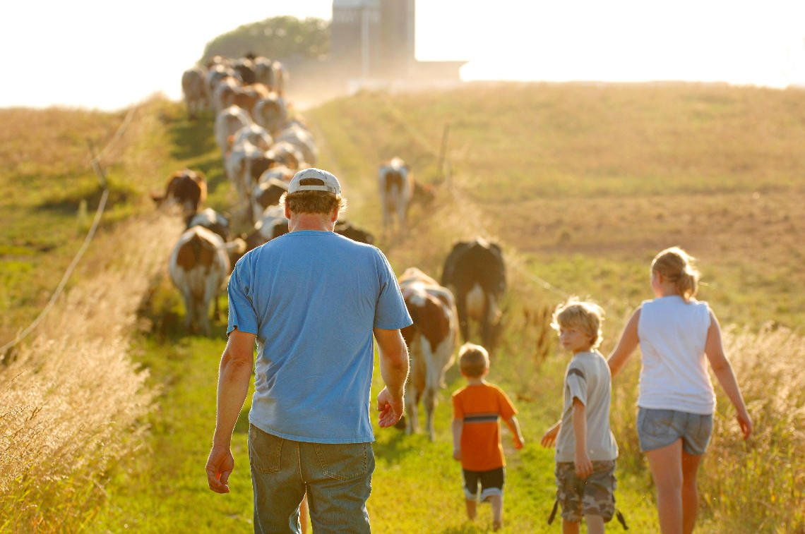 Ag photo of family walking with dairy cows in Minnesota