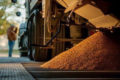 A farmer waits while freshly harvested corn gets dumped in the grain bin.