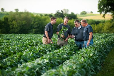 Agricultural specialists looking at soybeans on a farm near Wanamingo, Minnesota/