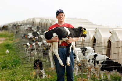 Ag photo of a farmer holding a young calf on his dairy farm in Minnesota.