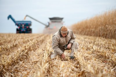 A farmer checks the soil while harvesting corn in southern Minnesota.