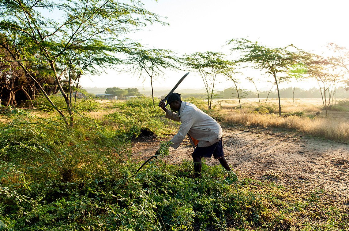 A man uses two machetes to clear brush in Haiti