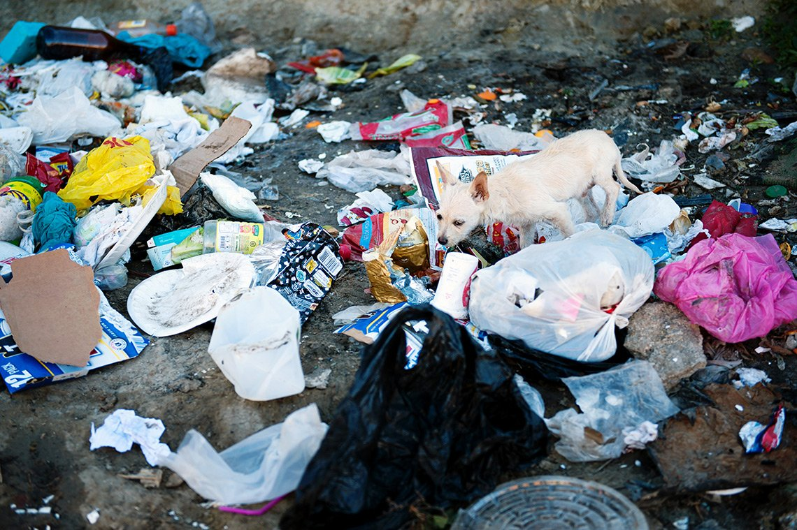 A dog rummages through garbage on a Tijuana street