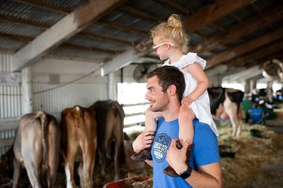 Editorial photo of a girl on dad's shoulders in Minnesota cow barn