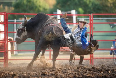 Editorial photography of a cowboy getting thrown off a bull at the rochester mn rodeo