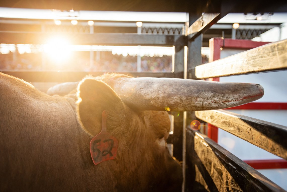 Editorial photography of a bull's horns at rochester mn rodeo