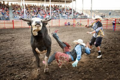 Editorial photography of a bull rider being thrown from a bull at rochester mn rodeo
