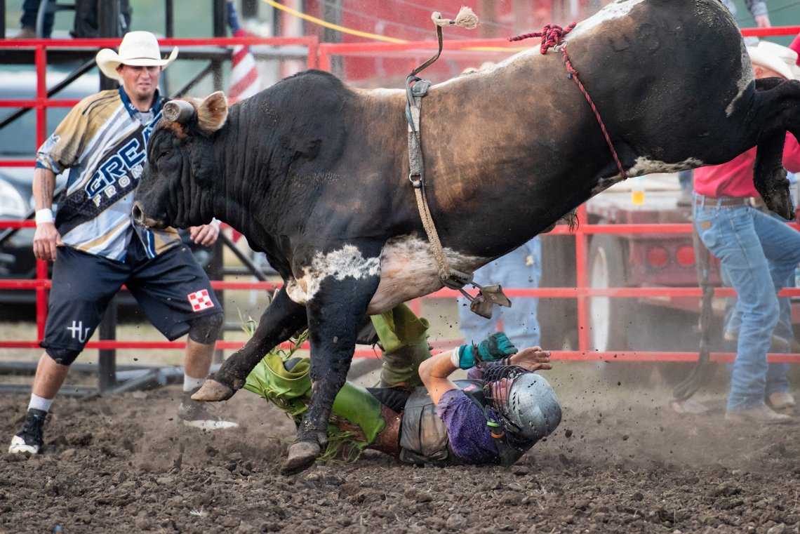 Editorial photography of rider thrown off a bull at rochester mn rodeo