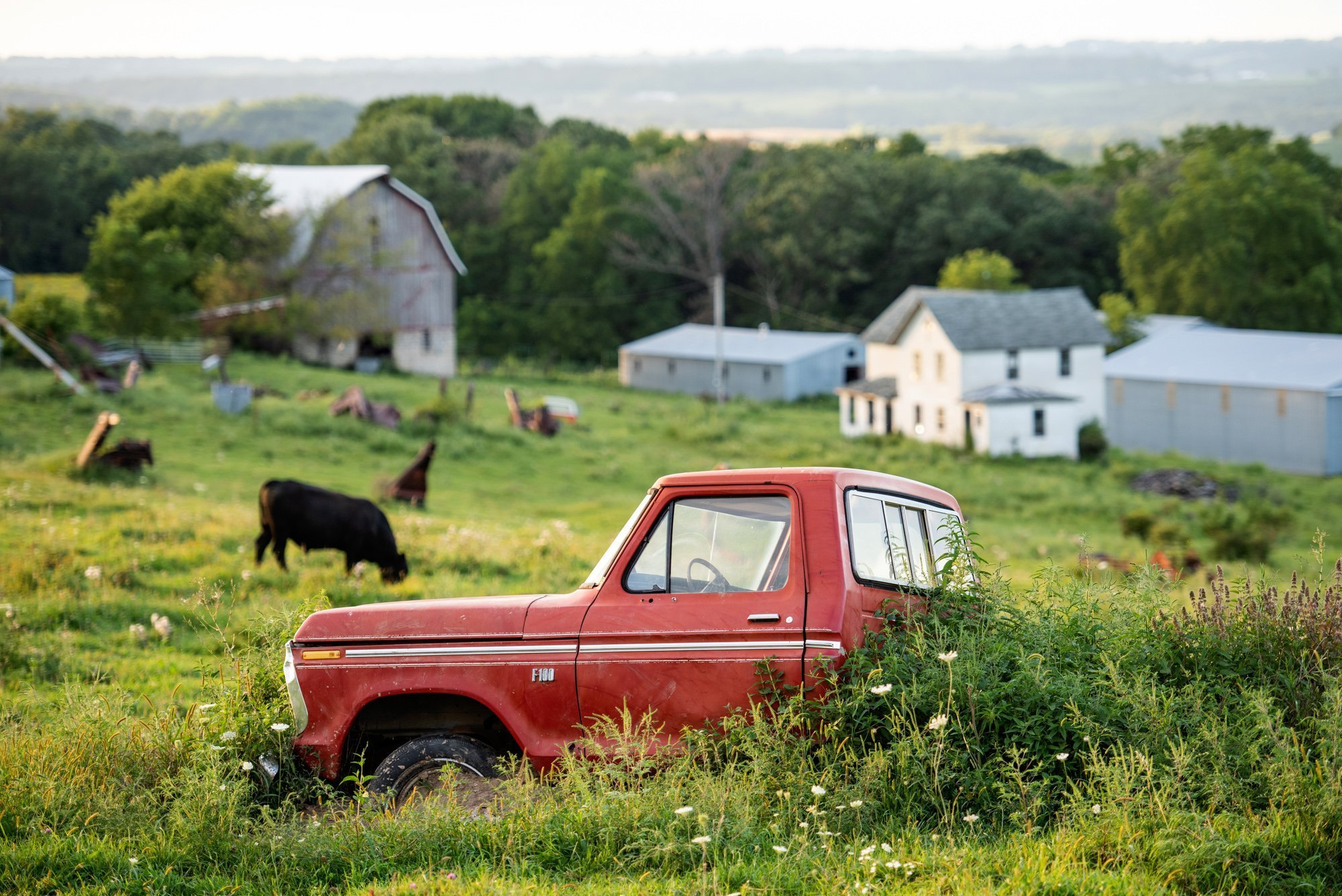 vintage Ford F100 in field