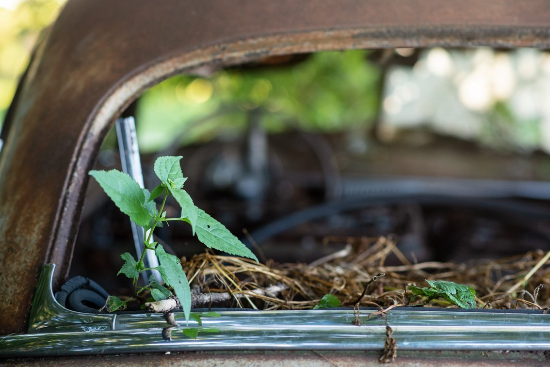 plant growing in old Chevy Deluxe