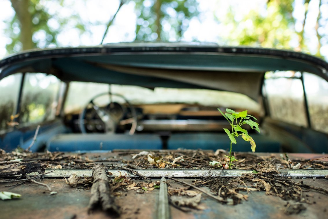 plant growing from back of rusted Chevrolet Impala