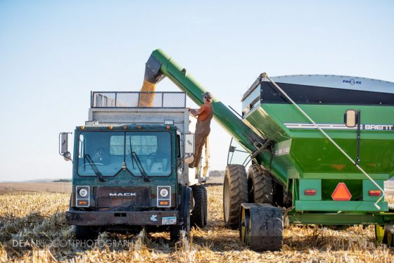 Farmer climbs ladder to look into grain cart