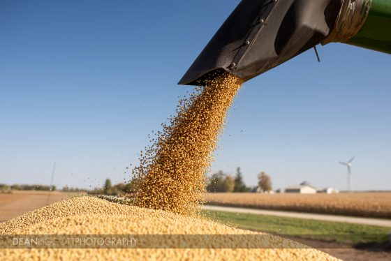 soybeans flow from a combine to a grain truck
