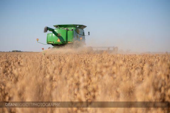 A John Deere combine harvest soybeans just west of Rochester, Minnesota, near Claremont.